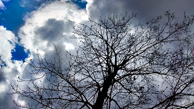 Blue sky, bright and dark clouds behind bare tree